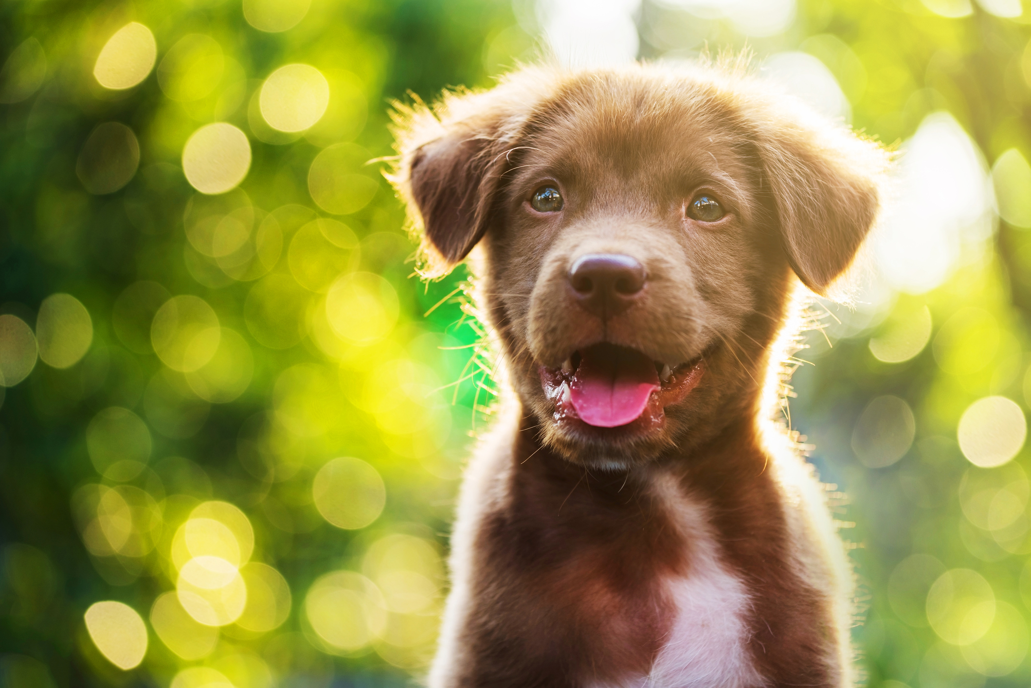 How Social Media Shines the Light on Dog Rescues (And How It Can Help Your Business!) Image